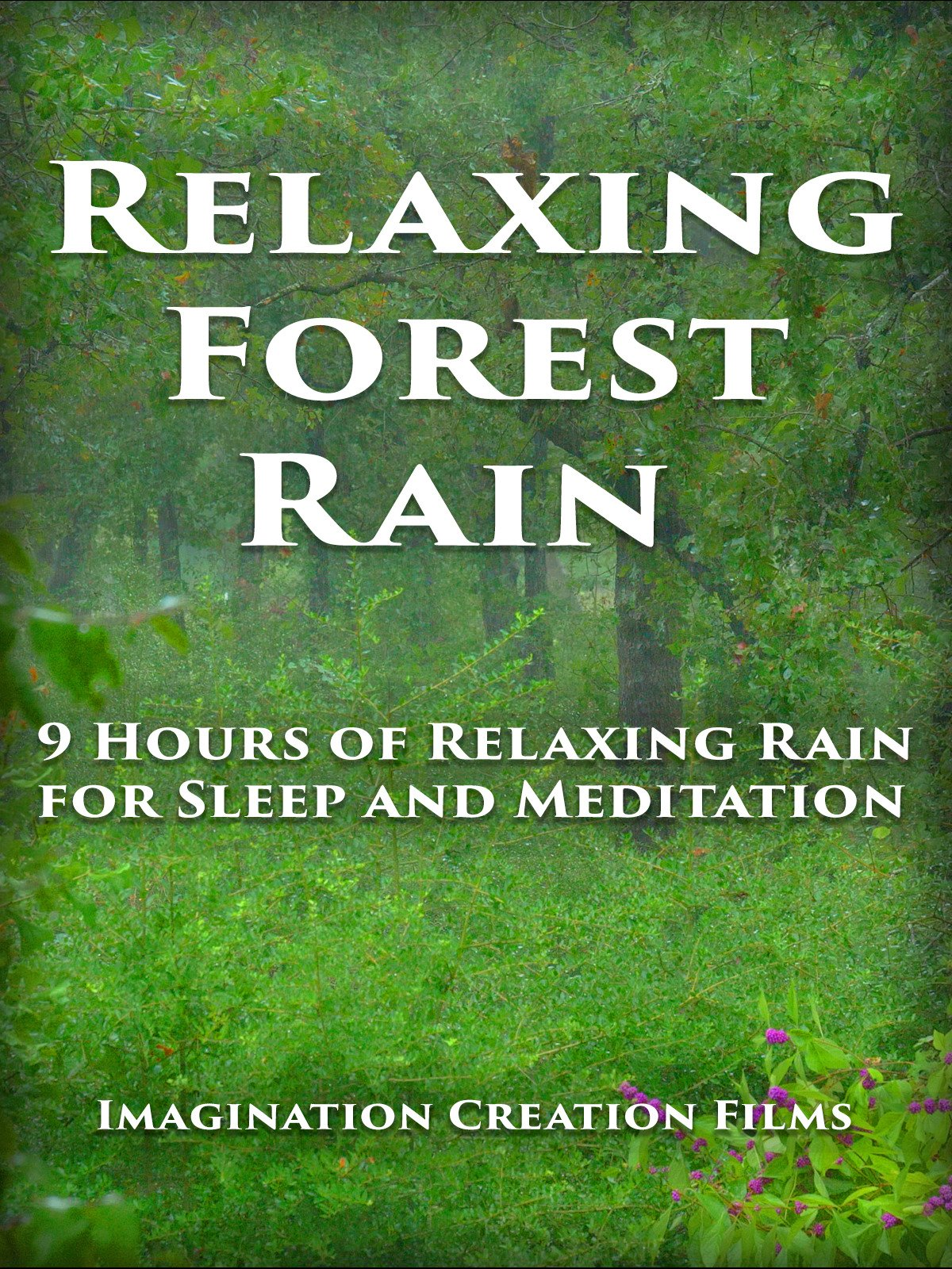 Relaxing Forest Rain