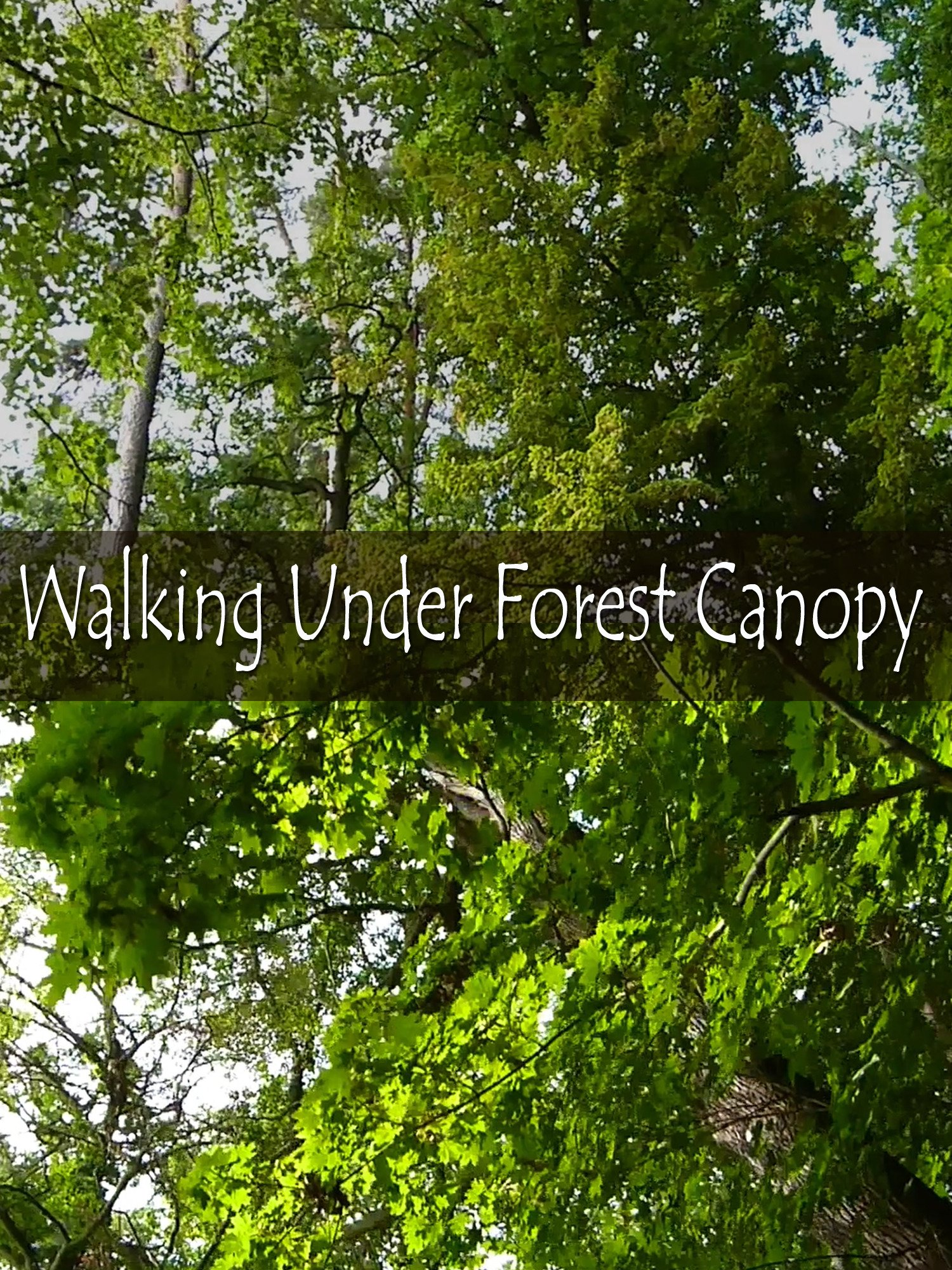 Walking Under Forest Canopy