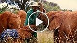 Born To Be Wild 3D: Wild Filmmaking Webisode