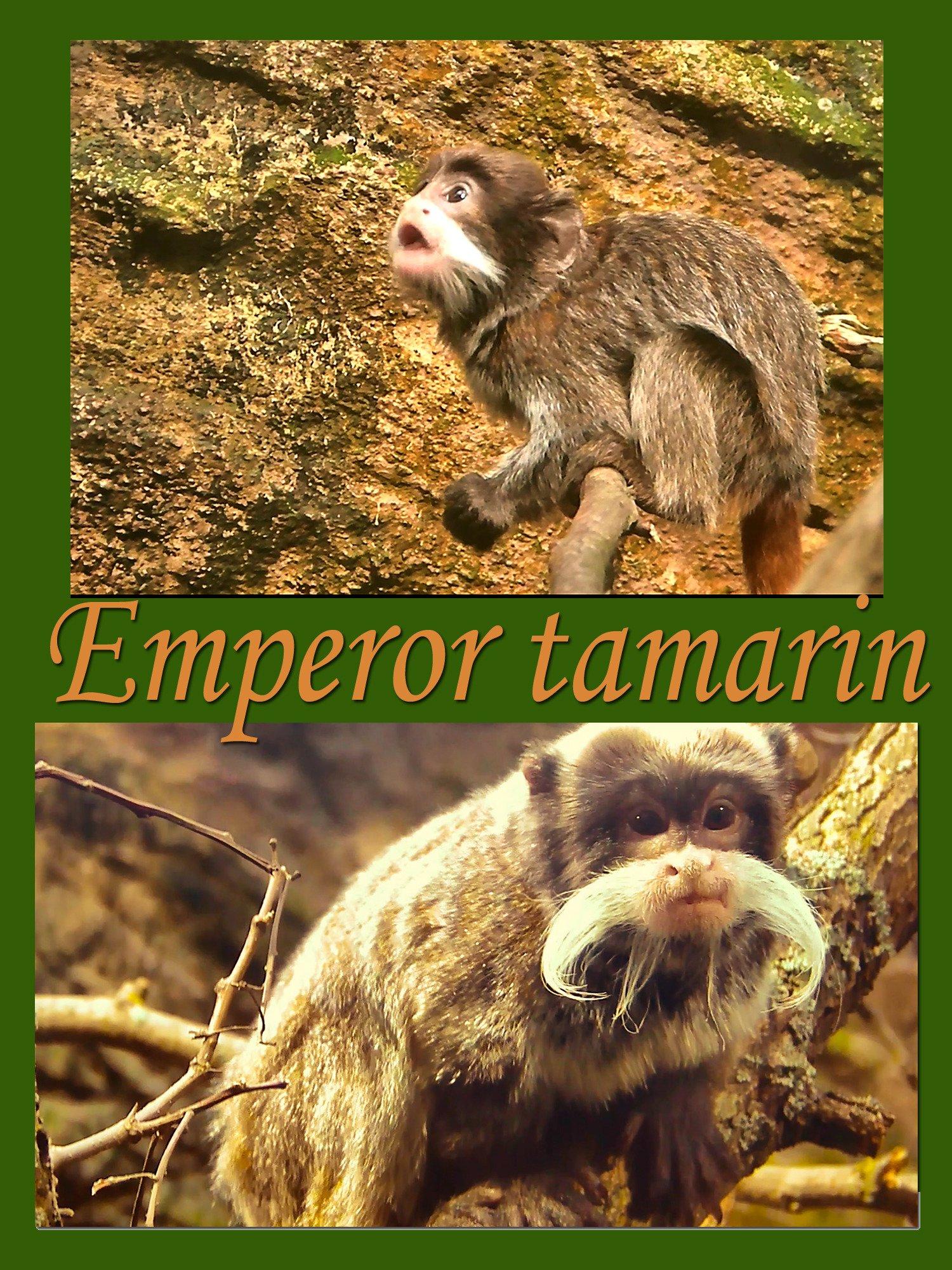 Emperor tamarin on Amazon Prime Instant Video UK