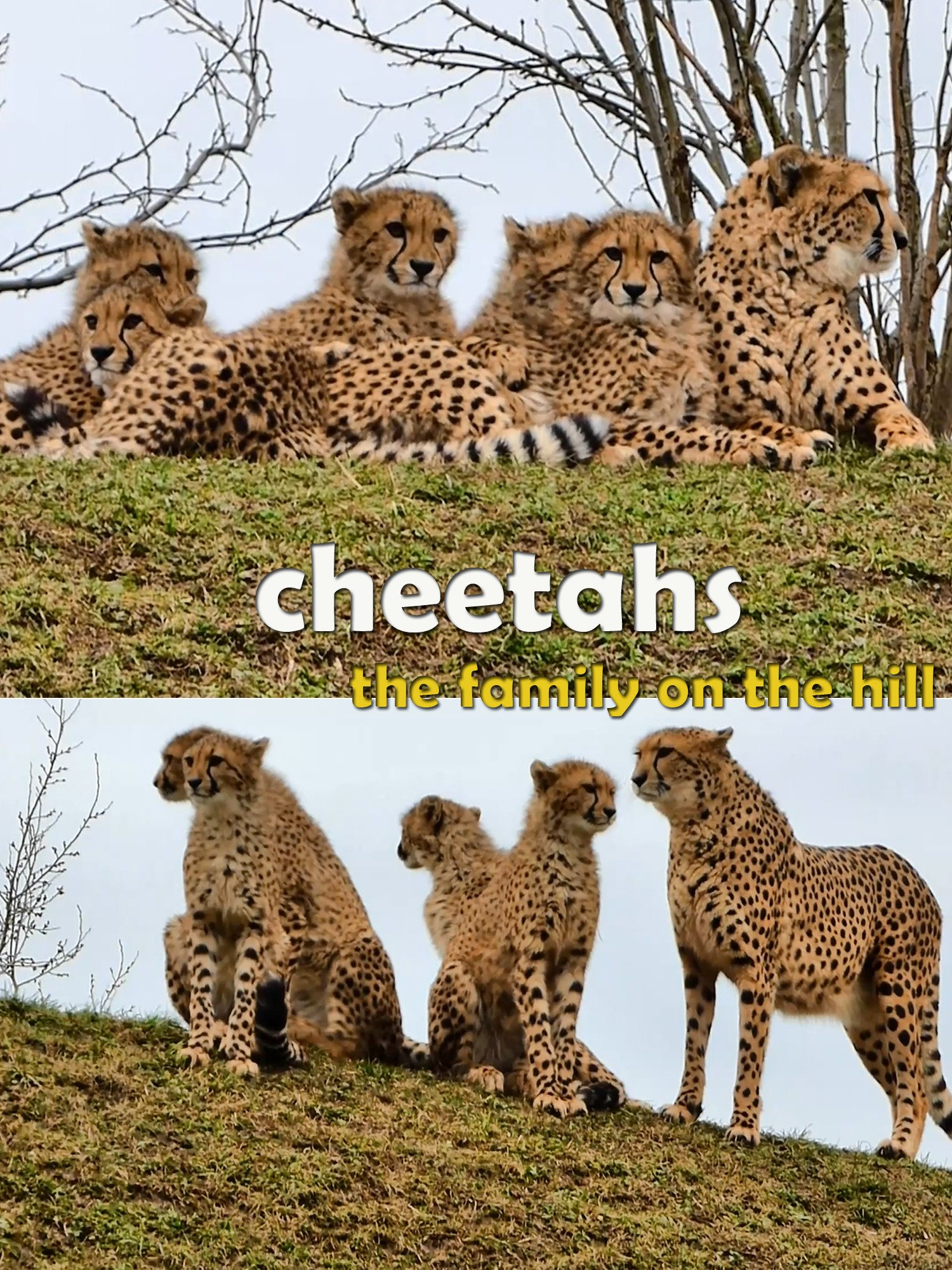 Cheetahs. The family on the hill on Amazon Prime Instant Video UK