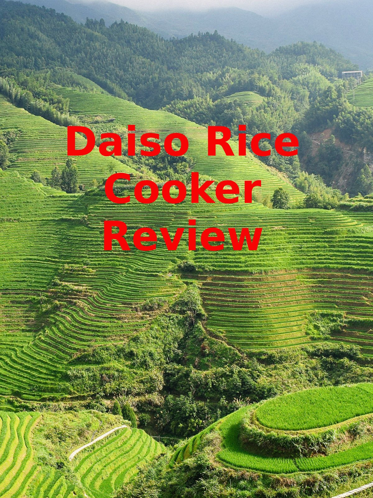 Review: Daiso Rice Cooker Review