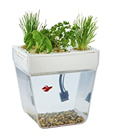 Self Cleaning Aquariums Best Rated Tanks In 2018 Reviews Fish Tank Advisor