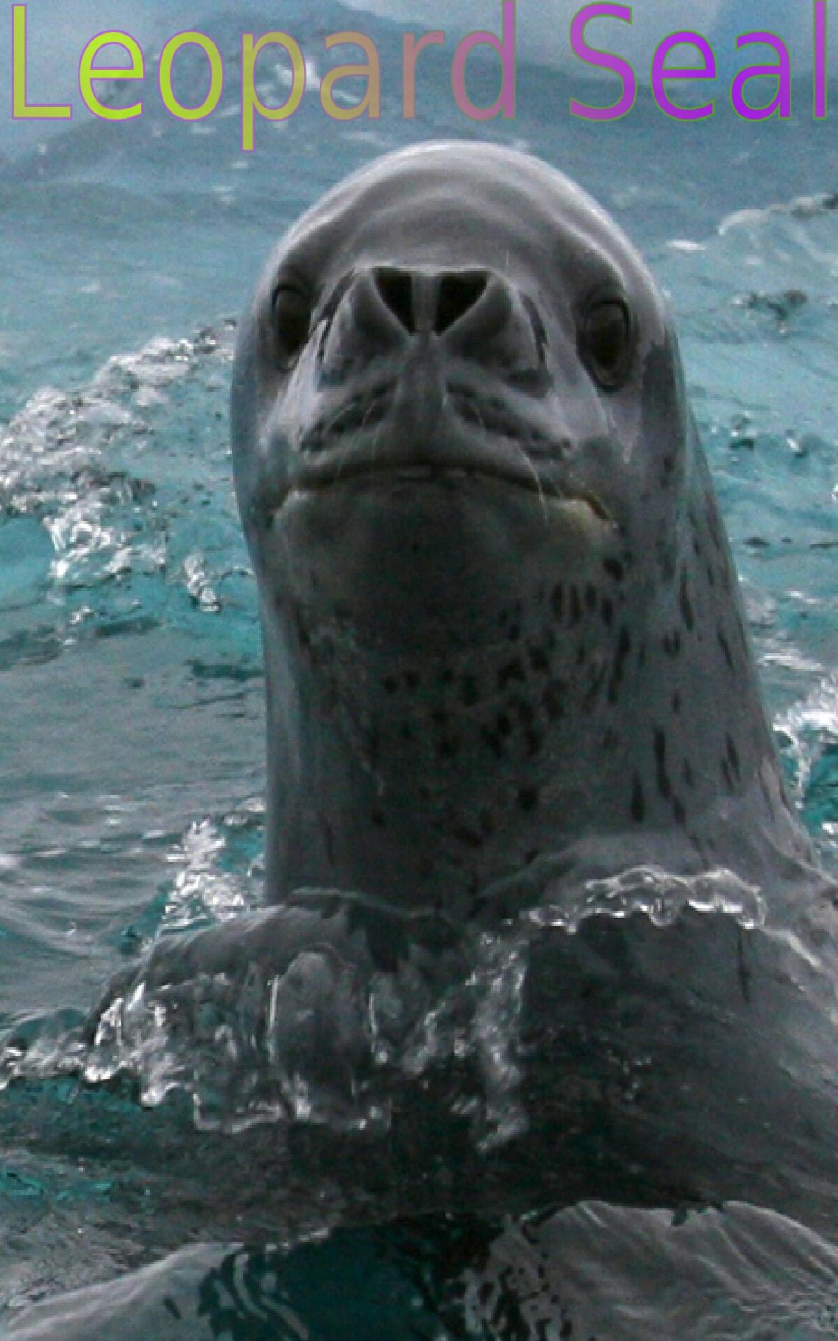 Amazon.com: Wild Animals of Antarctica 1: Appstore for Android