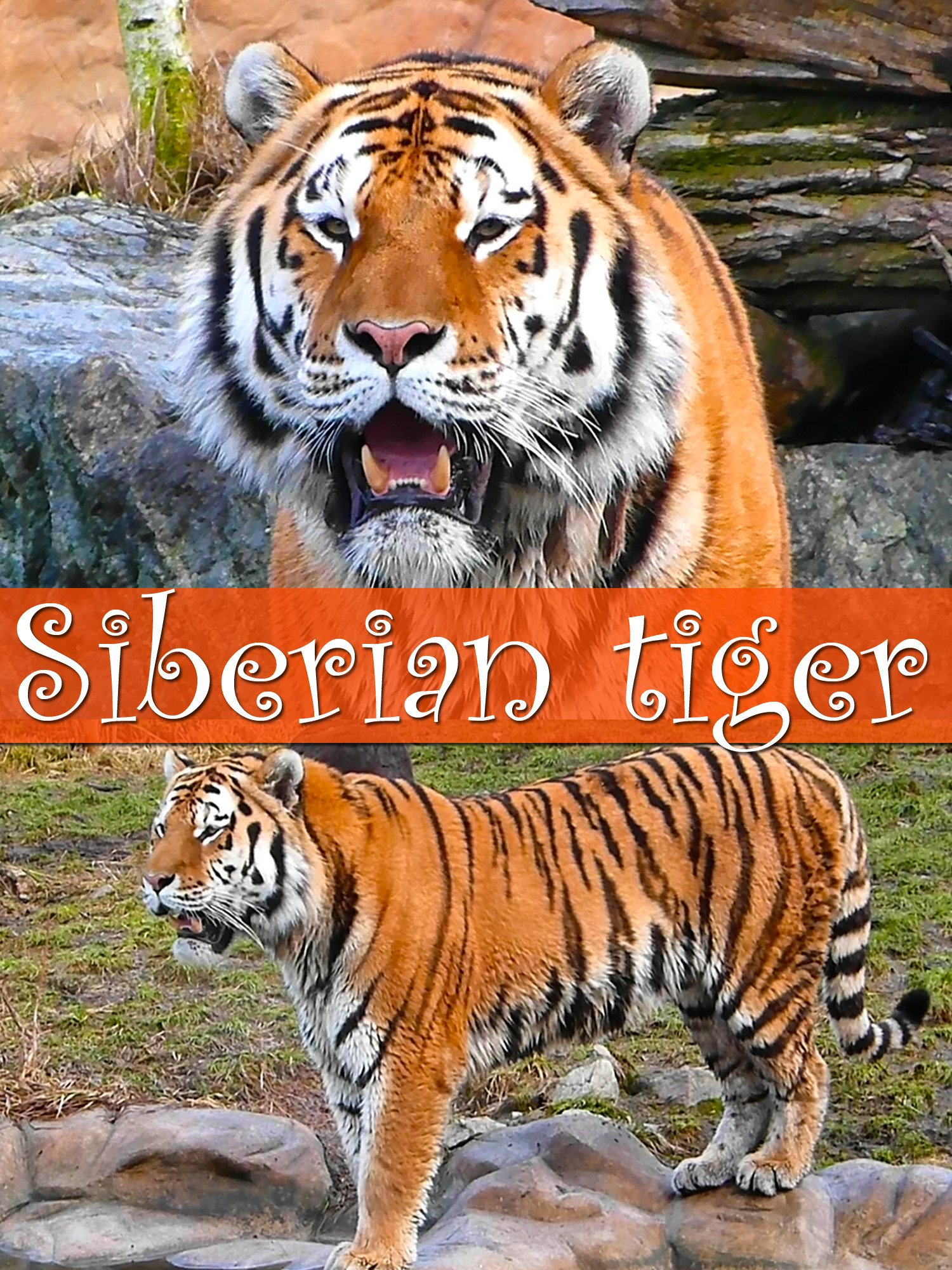 Siberian tiger on Amazon Prime Instant Video UK