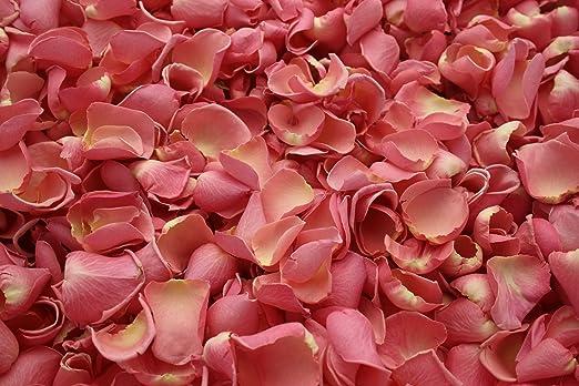 Gefriergetrocknete Rosenblätter - Pink