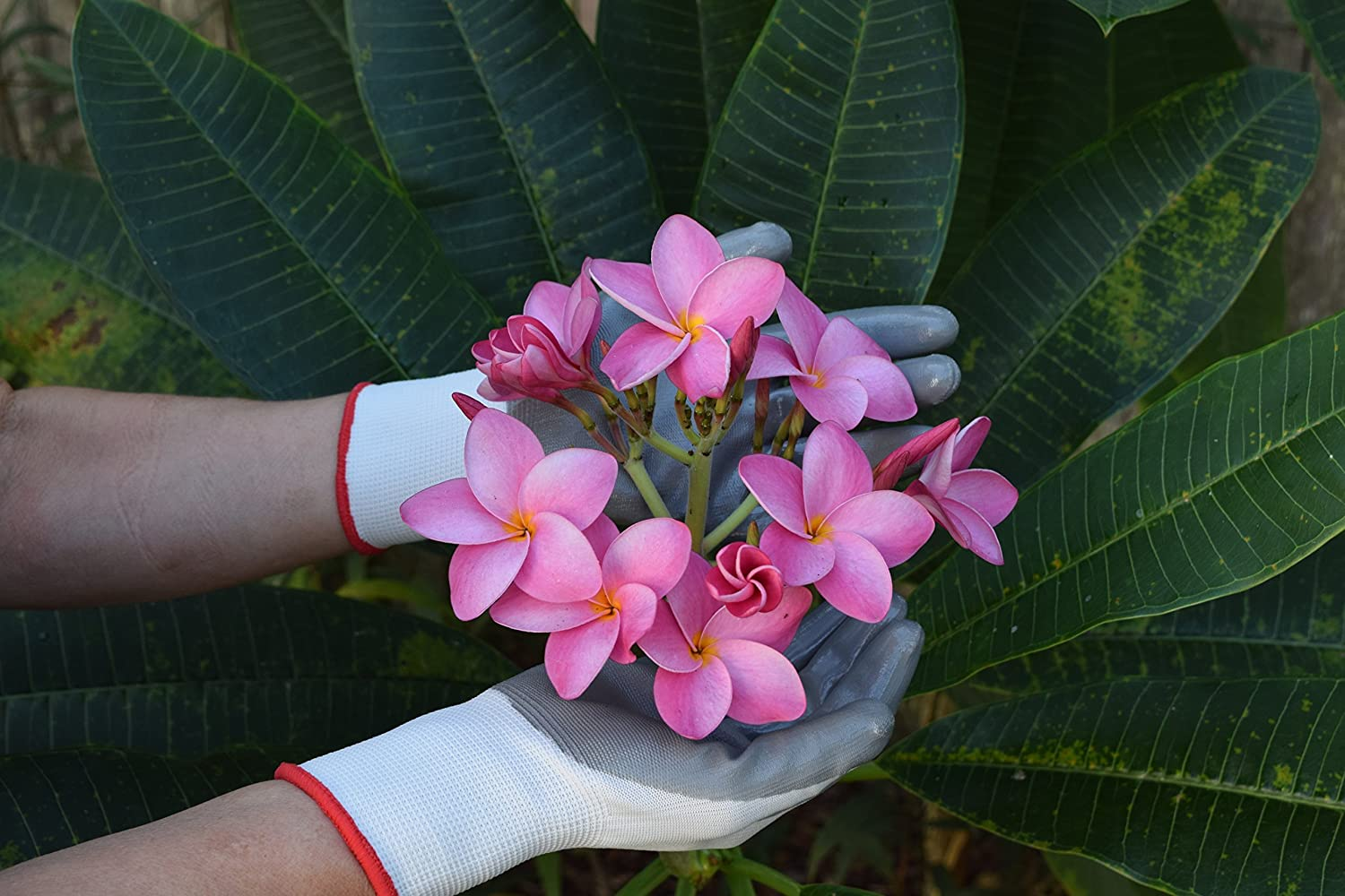 Best gardening gloves for women growing tomatoes 4 you for Gardening gloves ladies