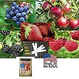 Fruit Combo Pack Raspberry, Blackberry, Blueberry, Strawberry, Apple (Organic) 975+ Seeds UPC 600188190656 & 5 Plant Markers (+Free Carnations)