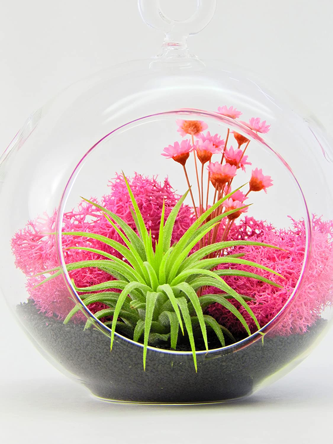"Bliss Gardens Air Plant Terrarium Kit with Pink Flowers, Moss, Black Sand, 4"" Round Globe / Pink Paradise"