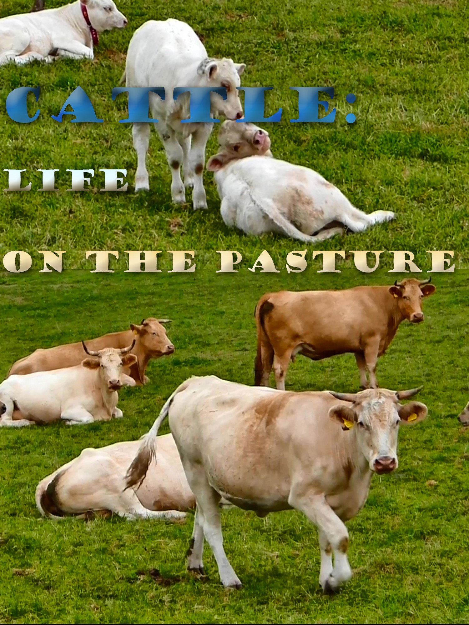 Cattle: Life on the Pasture