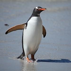 Amazon.com: Wild Animals of Antarctica: Appstore for Android