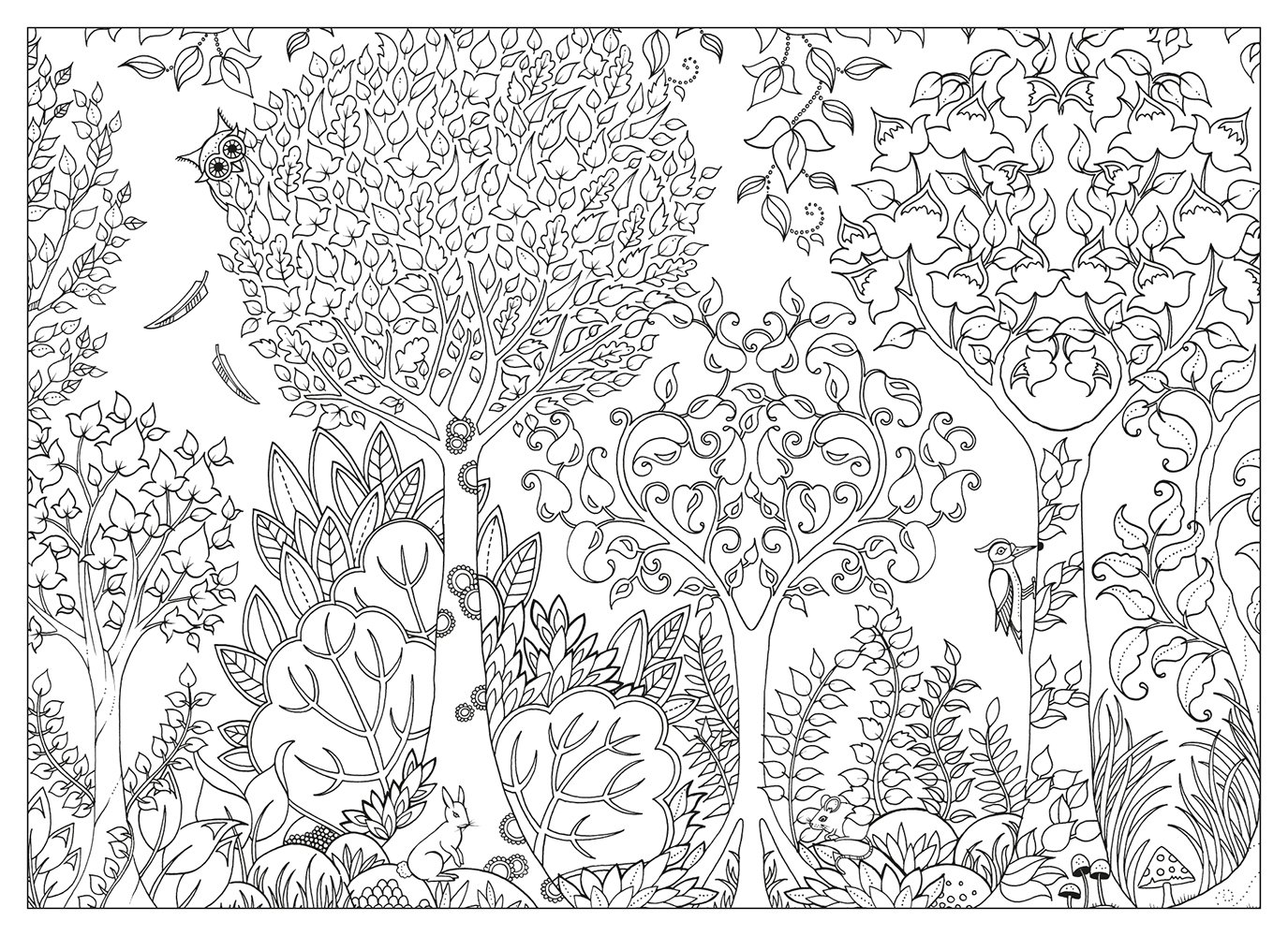 1000 images about pagine da colorare on pinterest Coloring book amazon