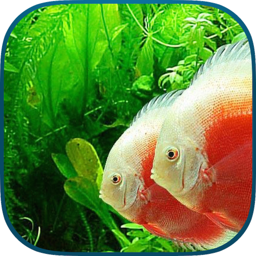tanked-aquarium-3d-relaxing-tropical-scenes-with-coral-reef-sharks-fish-tank