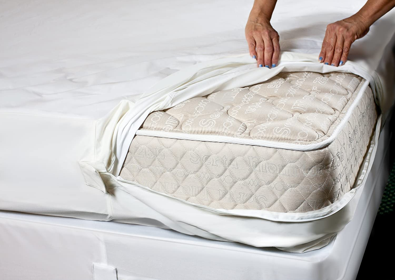 Bed Bug Management | Restoring Dignity Omaha