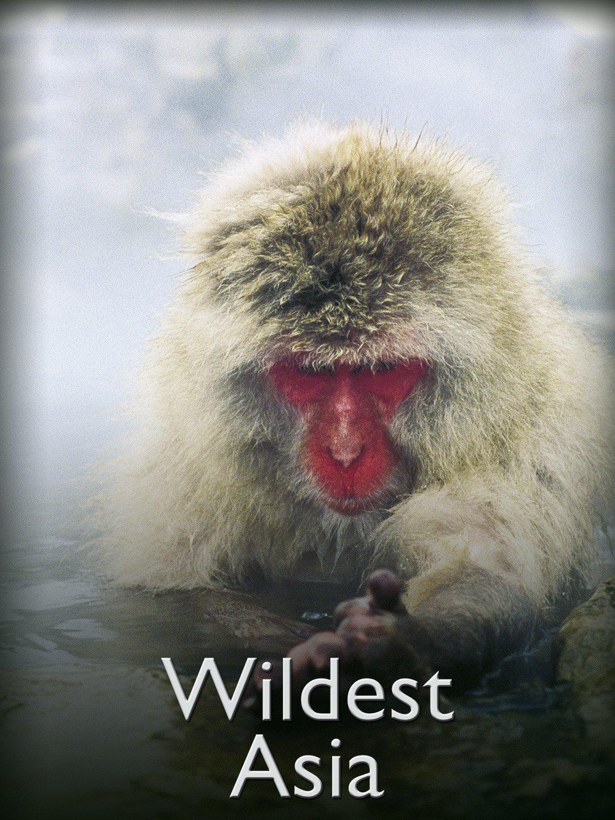 Wildest Asia on Amazon Prime Instant Video UK