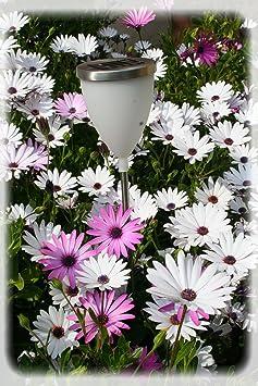 watt home 401 40 40 tulipa arc en ciel clairage solaire poly thyl ne inox luminaires et. Black Bedroom Furniture Sets. Home Design Ideas