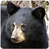 熊の鳴き声