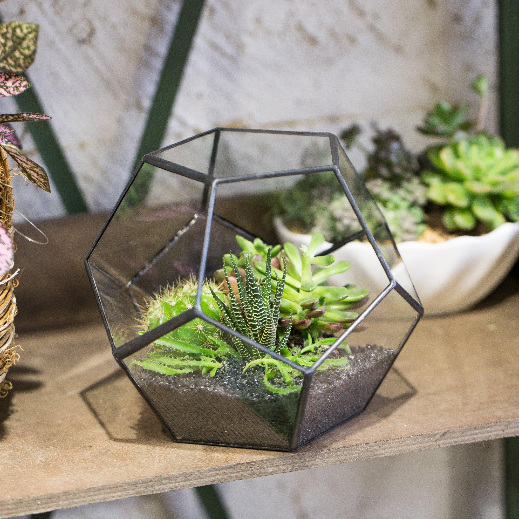 Geometric Glass Modern Tabletop Terrarium