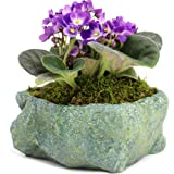 Natural Elements Rock Planter (Blue Lagoon) – Realistic with Intricate Stone Detail + Fiber Soil + Moss Mulch. Grow Succulents, Cactus, African Violets and Bonsai. Striking in Any Décor. (Tamaño: Blue Lagoon)