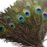 Piokio 100 pcs Natural Peacock Feathers in Bulk 10