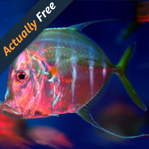 Marine-Aquarium-Fische