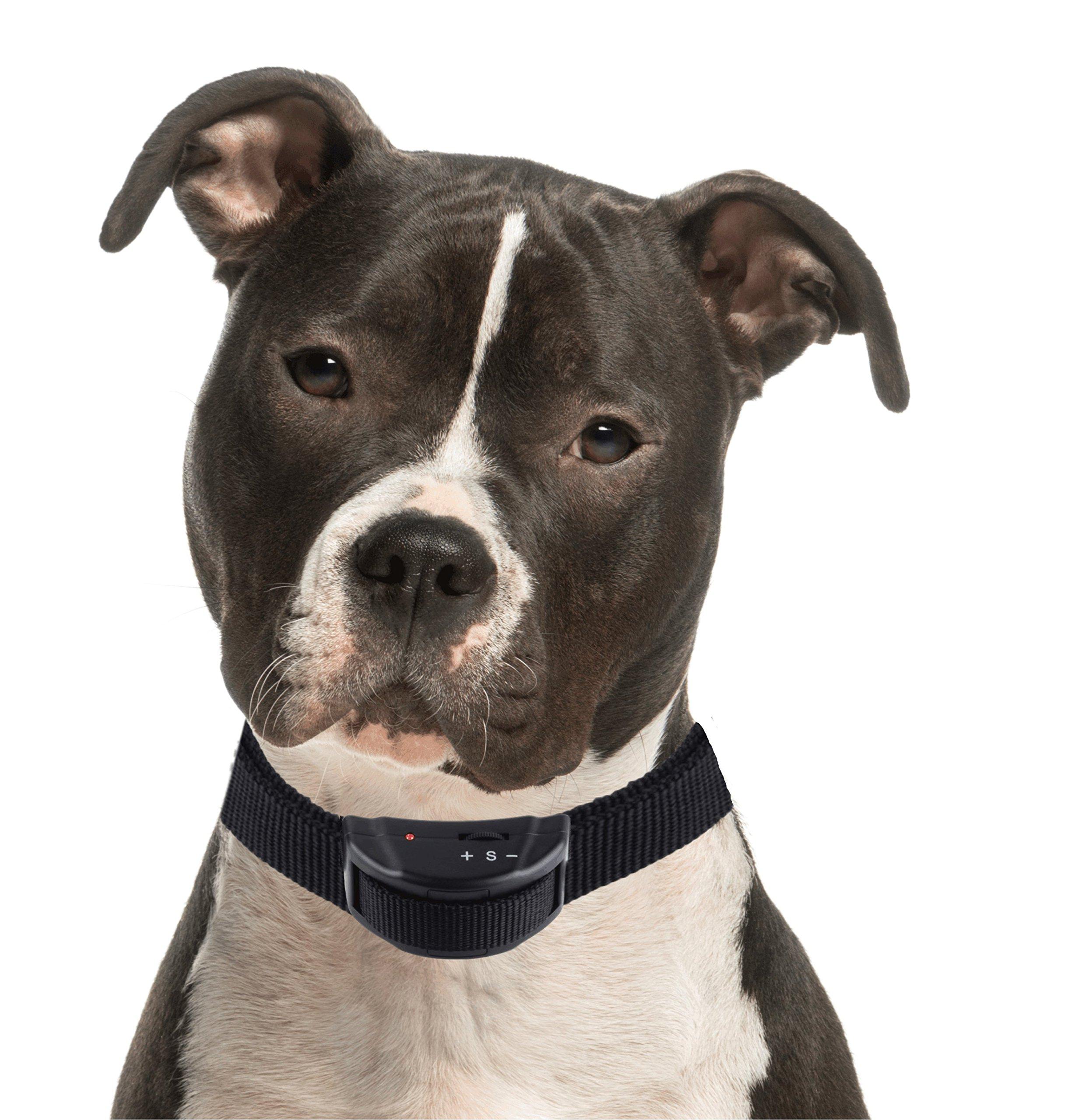 Citronella Bark Collar For Small Dogs Petsmart