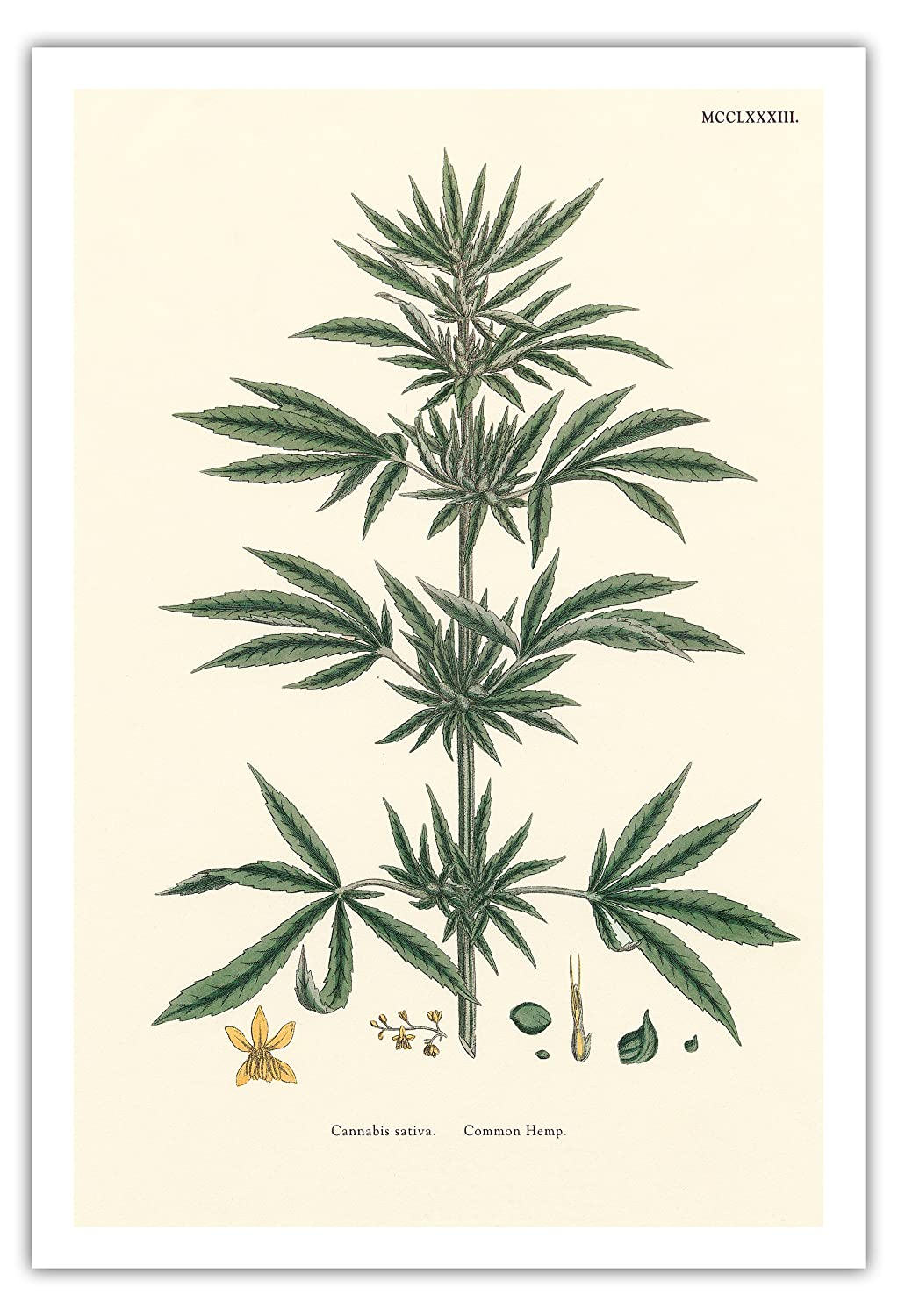 an introduction to the marijuana a plant cannabis sativa (marijuana is the mixture of dried, shredded flowers and leaves that comes from  the hemp plant) in 1619 the virginia assembly passed legislation requiring.