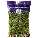 Supermoss Mountain Moss Fine Preserved Green Sphagnum 1200cuin (Color: Fresh Green, Tamaño: 200 in3 Bag (Appx. 8oz))