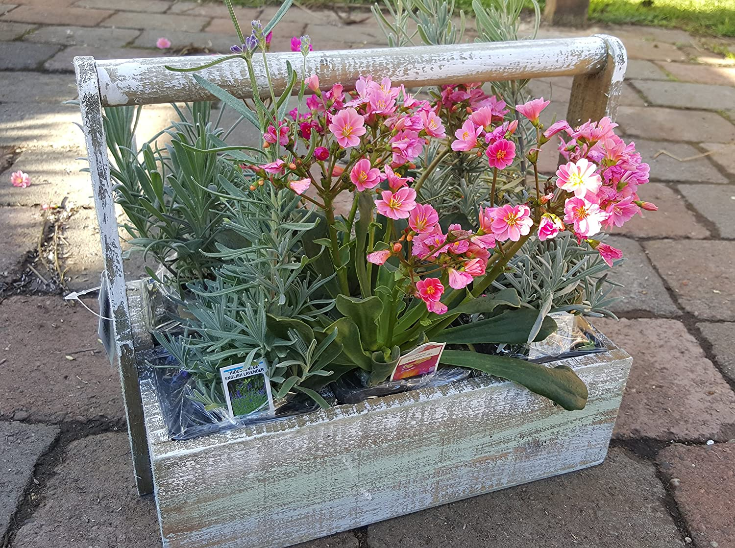 Wooden Basket with 6 Live Plants