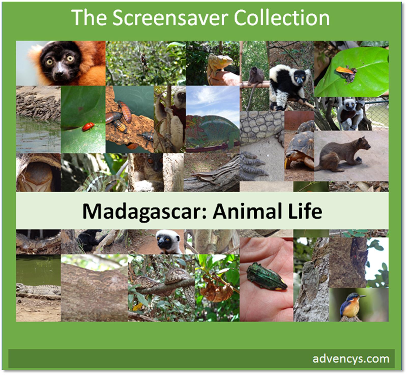 madagascar-animal-life-screensaver-download