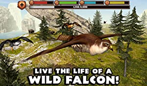 Falcon Simulator by Gluten Free Games