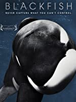 Blackfish [HD]