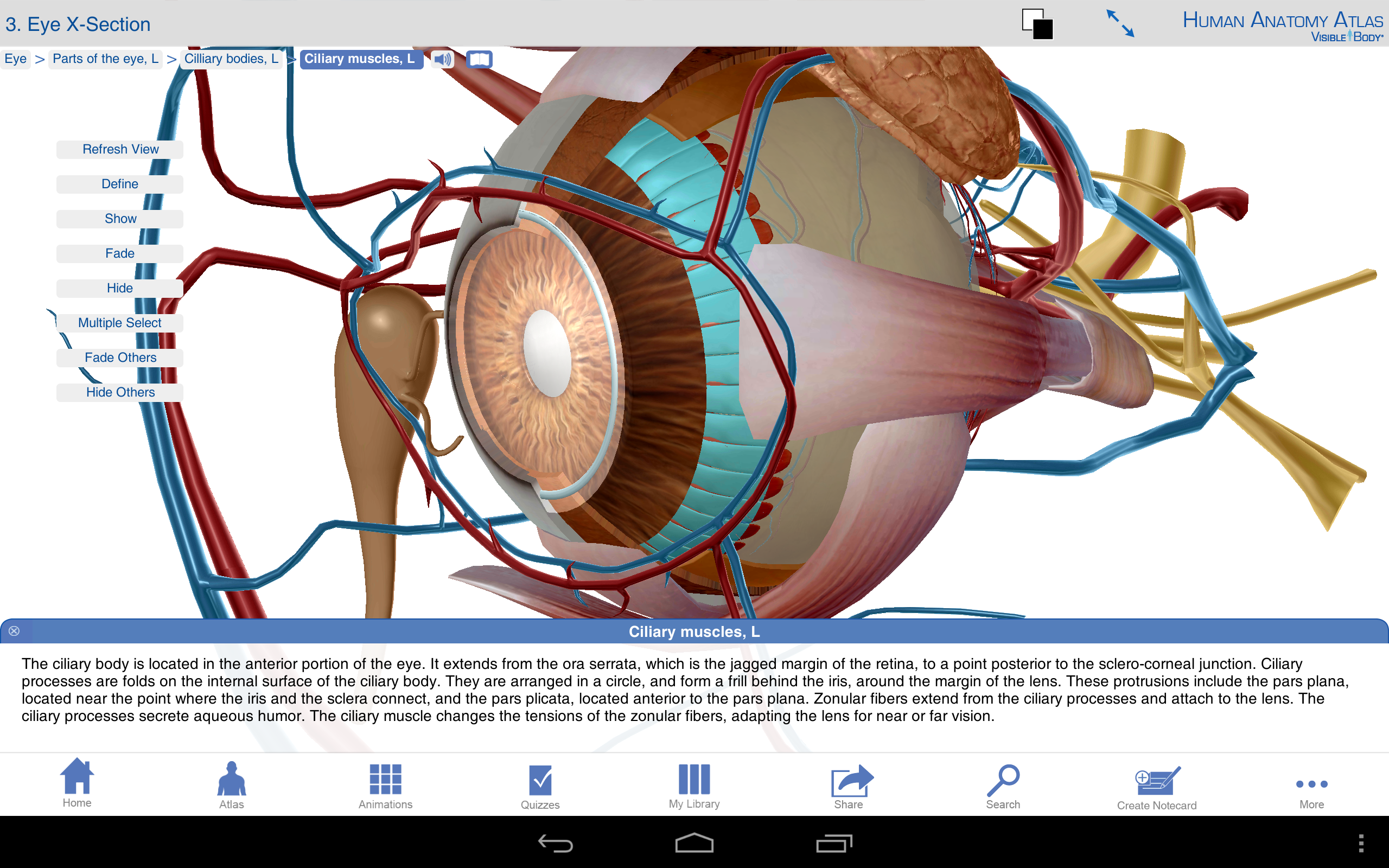 Human anatomy 3d software download free image collections human.