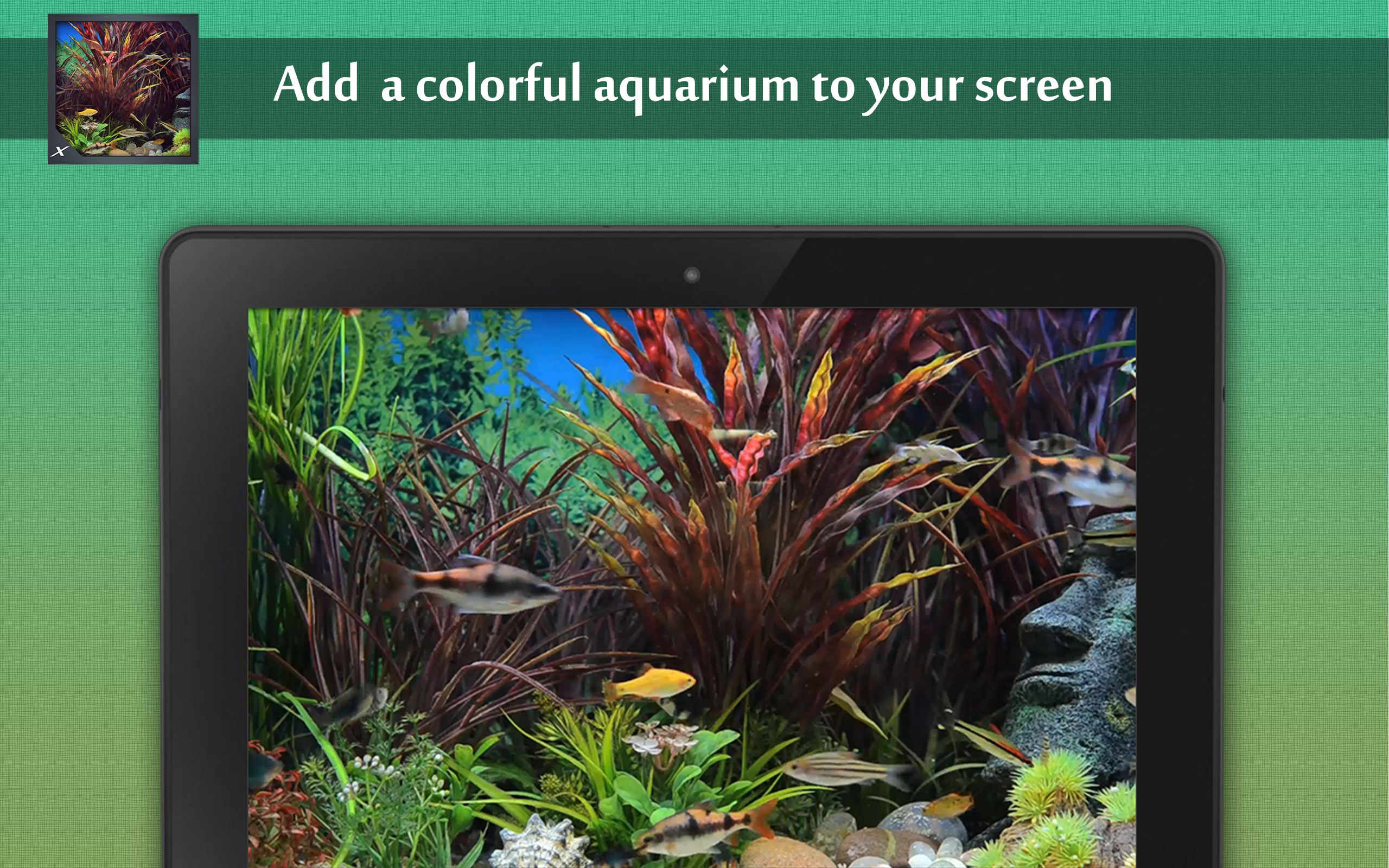 Funky fish aquarium view the colourful for Fish tank screen