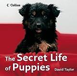 Taylor, David: The Secret Life of Puppies