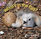 Butterfield, Moira: What's in the Egg?: Band 0/Lilac (Collins Big Cat)