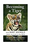 McCarthy, Susan: Becoming a Tiger: How Baby Animals Learn to Live in the Wild