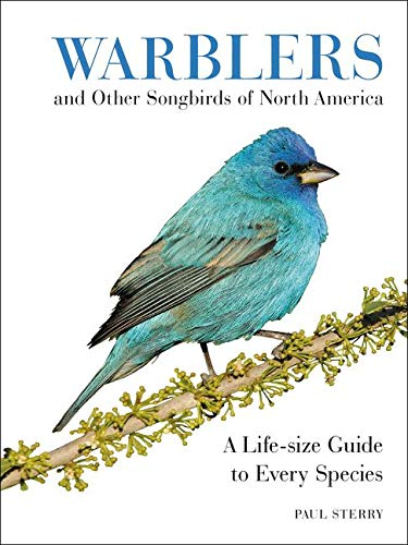 warblers-and-other-songbirds-of-north-america-a-life-size-guide-to-every-species