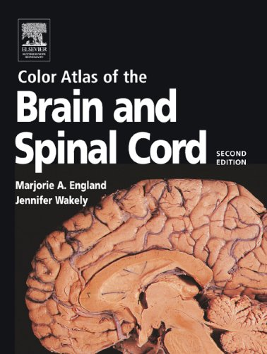 color-atlas-of-the-brain-and-spinal-cord-2e