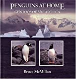 McMillan, Bruce: Penguins at Home: Gentoos of Antarctica