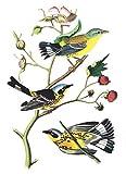 Dover: Audubon Bird Notebook (Decorative Notebooks)