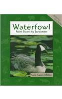 Waterfowl (Animals in Order) by Sara Swan…
