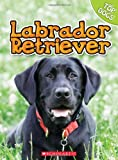 George, Charles: Labrador Retriever (Top Dogs (Children's Press))