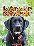 George, Charles: Labrador Retriever (Top Dogs (Scholastic))