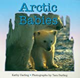 Darling, Kathy: Arctic Babies