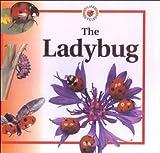 Crewe, Sabrina: Ladybug (Life Cycle of A...)