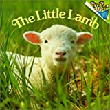 Dunn, Judy: The Little Lamb (Random House Picturebacks)