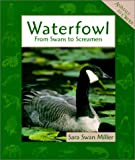 Miller, Sara: Waterfowls: From Swans to Screamers