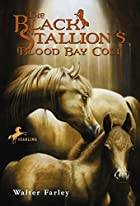 The Black Stallion's Blood Bay Colt by…