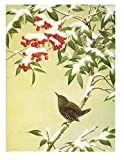 American Museum of Natural History: Bird on Berry Tree - American Museum of Natural History